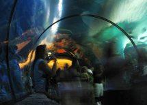Shark Reef Las Vegas - Mandalay Bay Resort