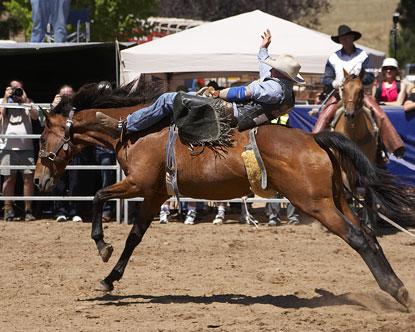 Dallas TX Rodeo  Rodeo in Dallas  Dallas Fort Worth Rodeo