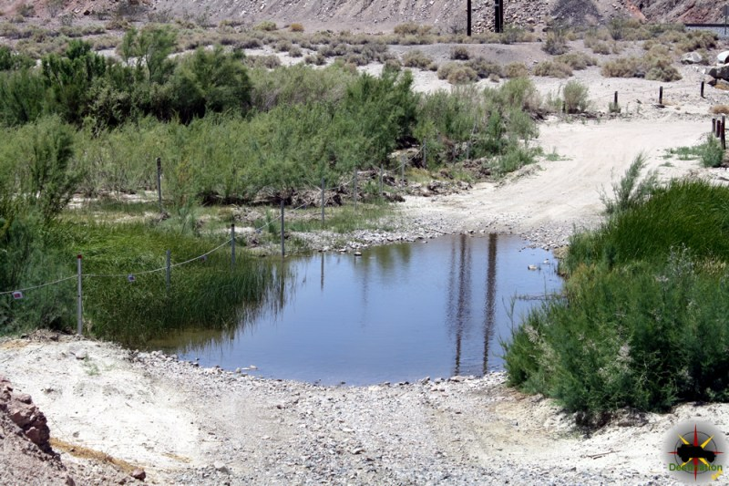 Southern Cattail along a water crossing on the old Mojave road.