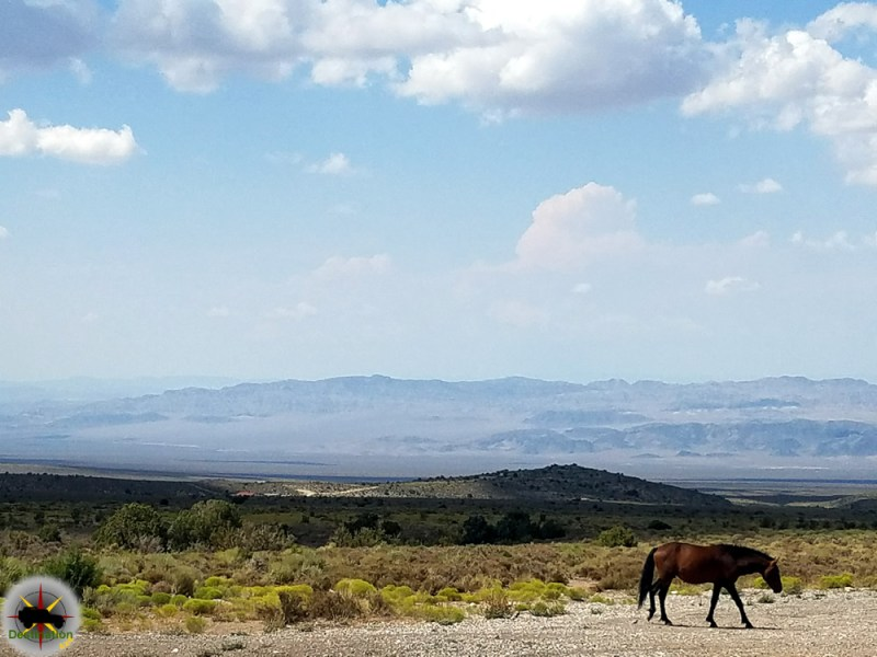 A lone mustang is the symbol of wild, power and freedom