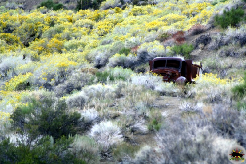An abandoned truck silently waits for its owner to return in Goldbelt Springs.
