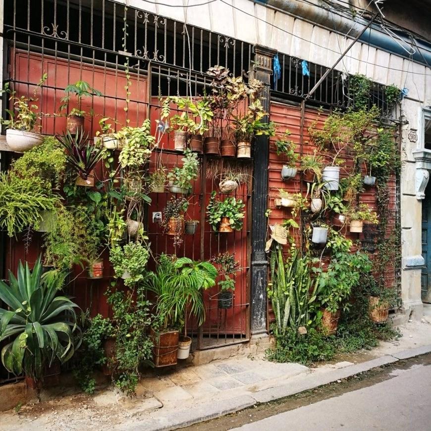 Garden - Old Havana Style