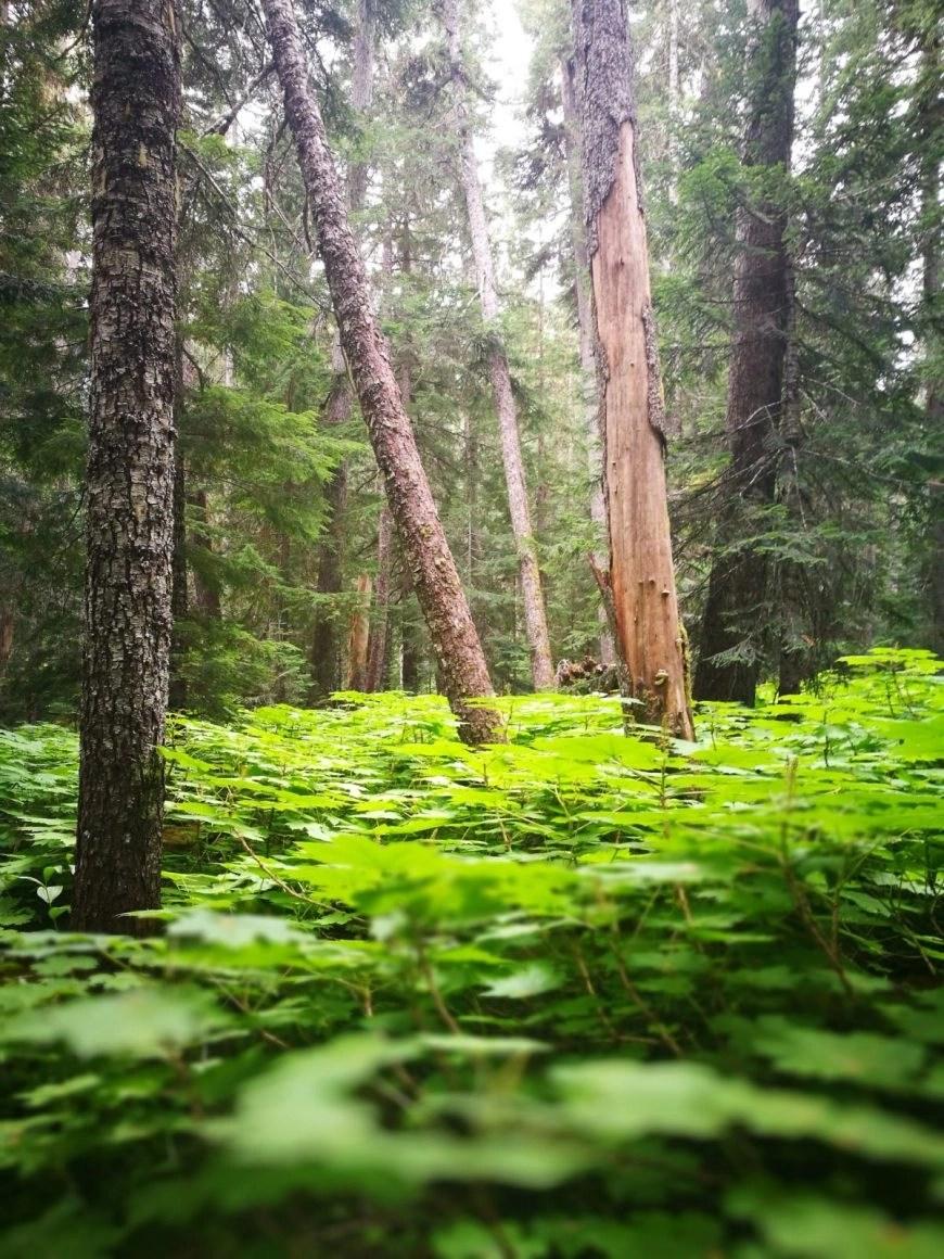 Destination Addict - The Sky Walk Trail, Whistler, British Columbia, Canada