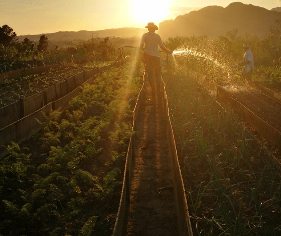 Destination Addict - The gardens of Finca El Parisio, Viñales, Cuba