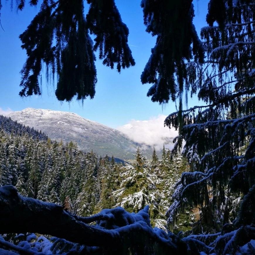 Destination Addict - Enjoying views from one of the platforms on the Ziptrek Ecotours Eagle Tour, Whistler, British Columbia, Canada