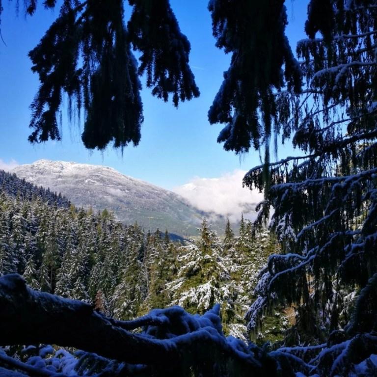 Enjoying views from one of the platforms on the Ziptrek Ecotours Eagle Tour, Whistler, British Columbia, Canada