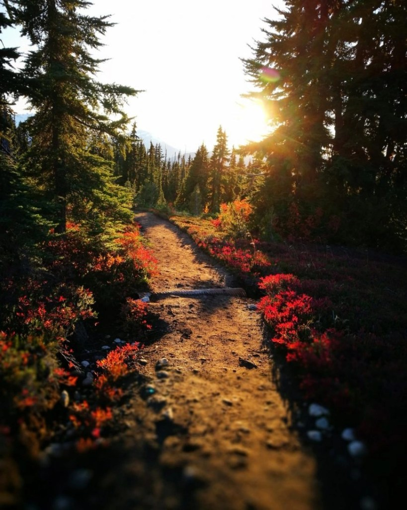 The sun setting whilst hiking in Garibaldi Provincial Park, near Whistler, British Columbia, Canada