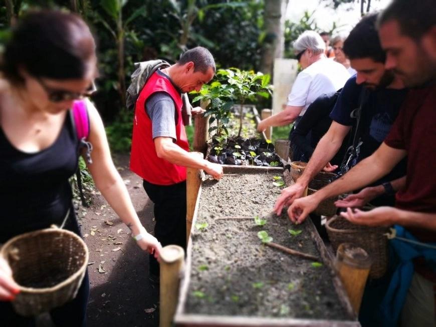 Destination Addict - Planting coffee beans on our tour of El Ocaso, Salento, Colombia