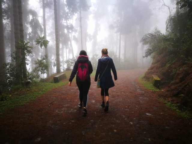 Enjoying a  misty day out hiking with our friend Karlie, Cocora Valley, Salento, Colombia