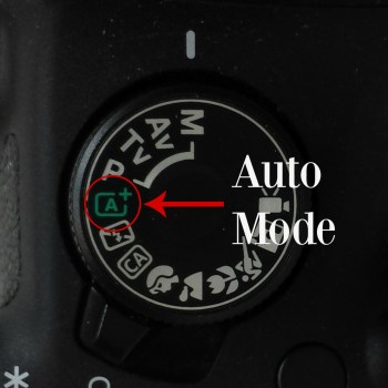 The Beginner's Guide to DSLR Photography-Part I: Choosing and Using a Camera   How to Choose Your DSLR Camera and Shooting in Auto Mode   The Basics of a DSLR Camera