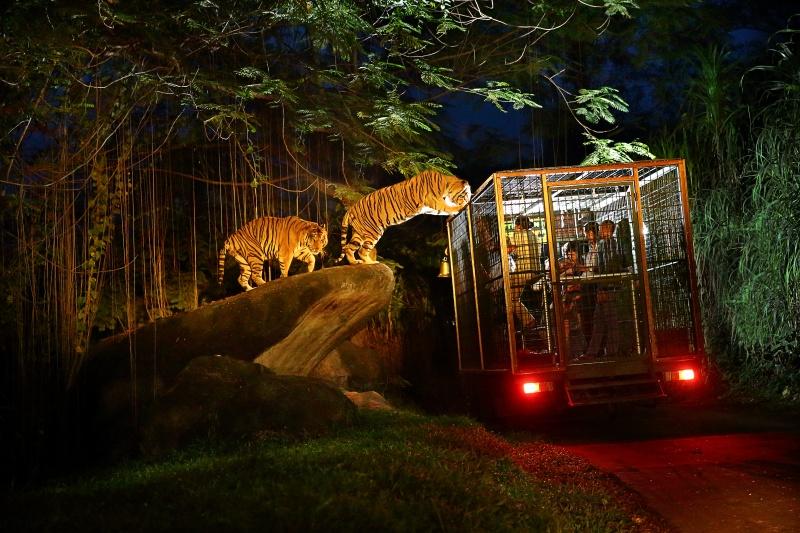 Bali-Night-Safari-Bali-Hello-Travel-31