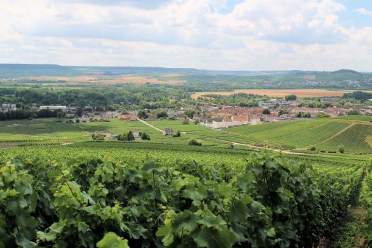 Vineyards in the Champagne District