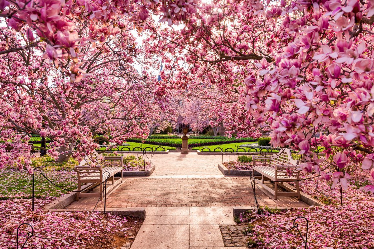 diagram the parts of cherry blossom tree lutron wiring grafik eye 17 stunning pictures to get you in