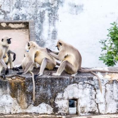 Enjoying the monkey treatment