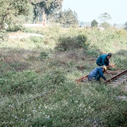 Cleaning the weeds from the rail track