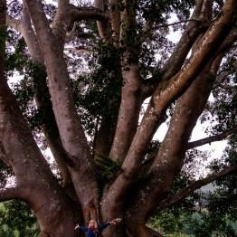 myanmar-hsipaw-trekking-3339