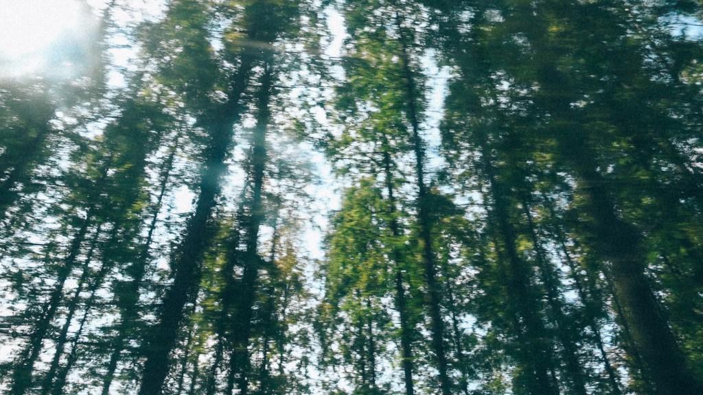 Dicas de ouro para começar importar da China Imagem de vários pinheiros