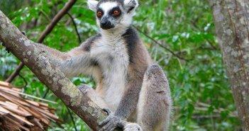 Reservas e Parques Naturais de Madagáscar. Autor: Bernard Gagnon sob licença Creative Commons Attribution-Share Alike 3.0 Unported