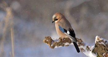 Observação de aves em Sagres