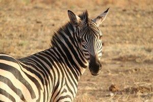 Quénia e Tanzânia numa viagem de sonho