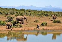 Circuito na África do Sul e Namibia