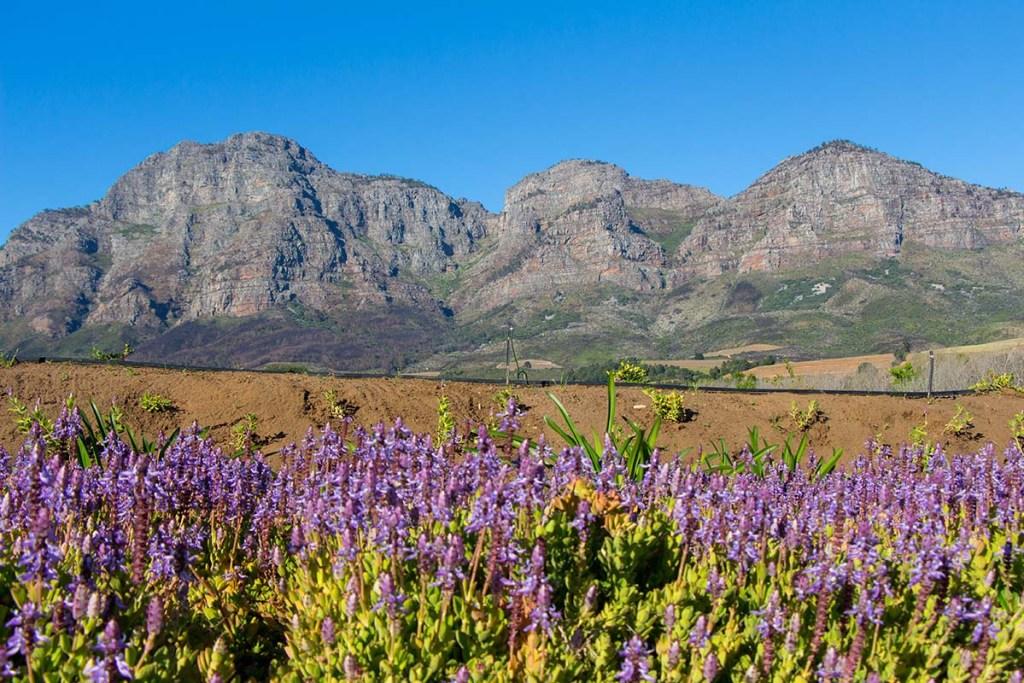 Vinícolas em Cape Town: Plaisir de Merle