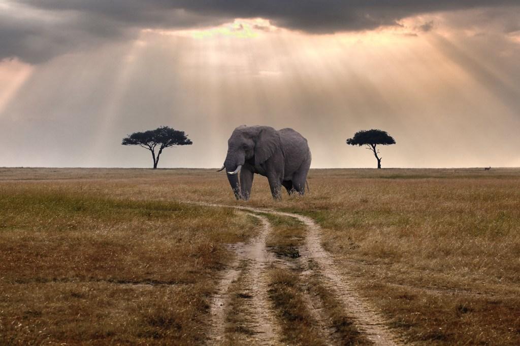 Melhores destinos de safári: Masai Mara