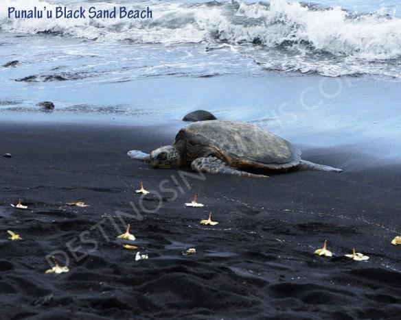 Punaluu Black Sand Beach2