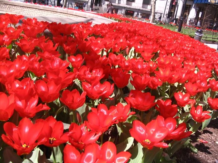 vermelhas
