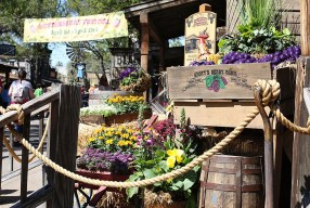 Knott's Berry Farm Boysenberry Festival: A SoCal Spring Tradition