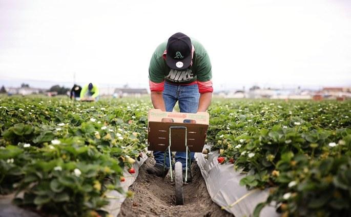 strawberry-farm-workers-dsm-3