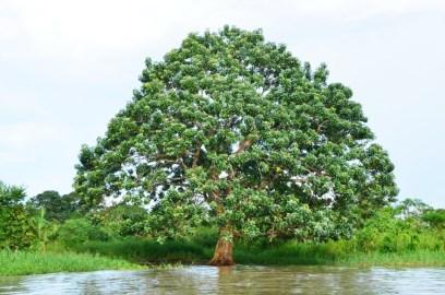 Peru Dschungel (2)