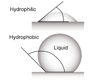 What is hydrophilic