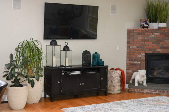 Transitional Family Room with Teal, Plants, and a Bulldog