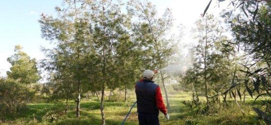 Ο Δήμος Iskele ξεκινά την καταπολέμηση του Pine Bug