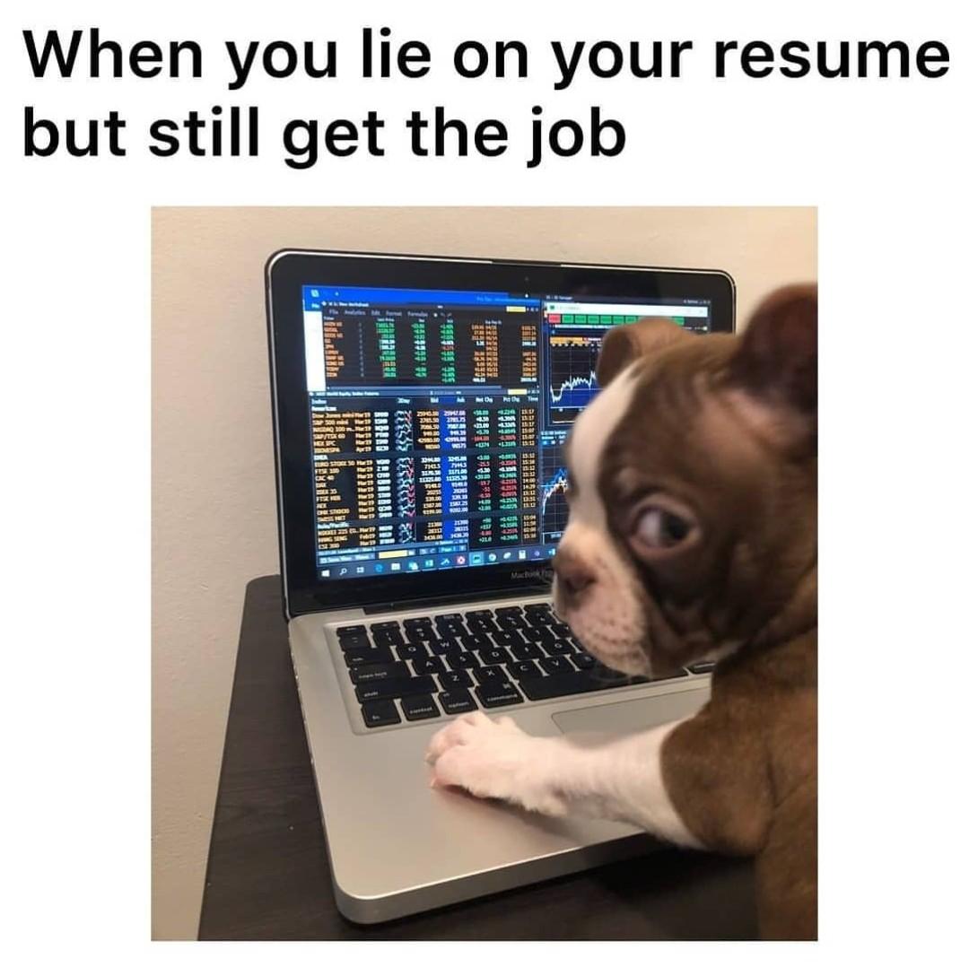 Dog memes funny