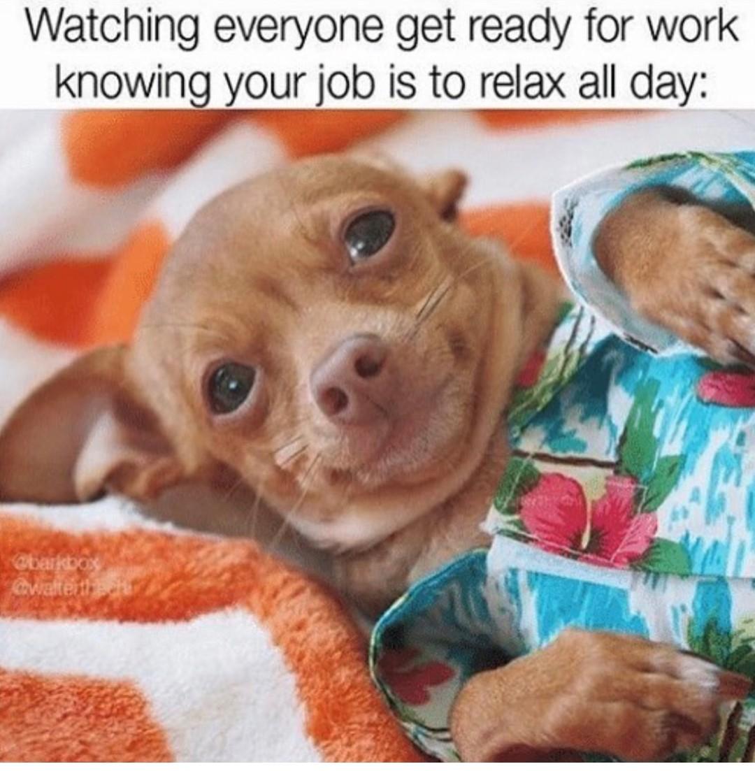 Dog meme 2021
