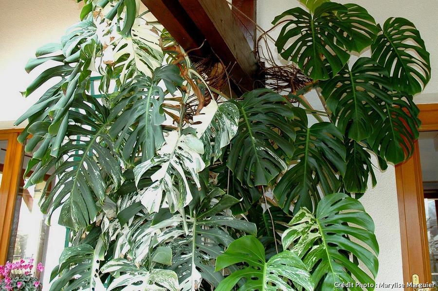 Kamerplanten Floralux