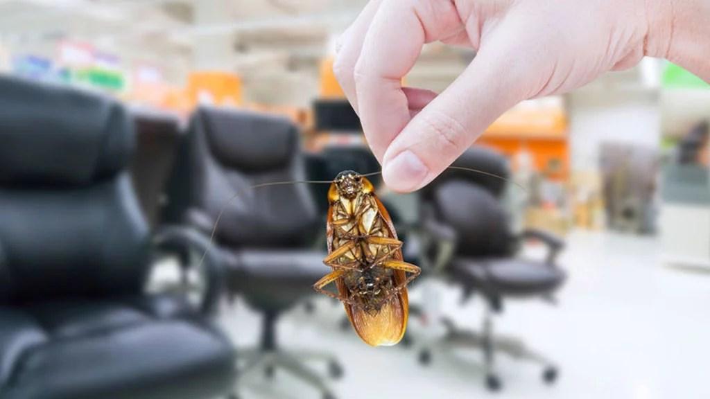 Estos son los tipos de plagas más comunes que pueden existir en tu empresa