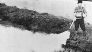 DDT, el antiguo veneno para chinches