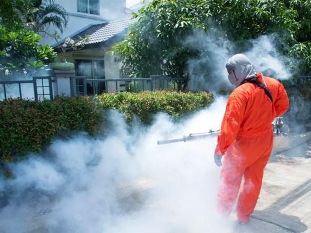 Las 5 plagas urbanas más comunes en Monterrey