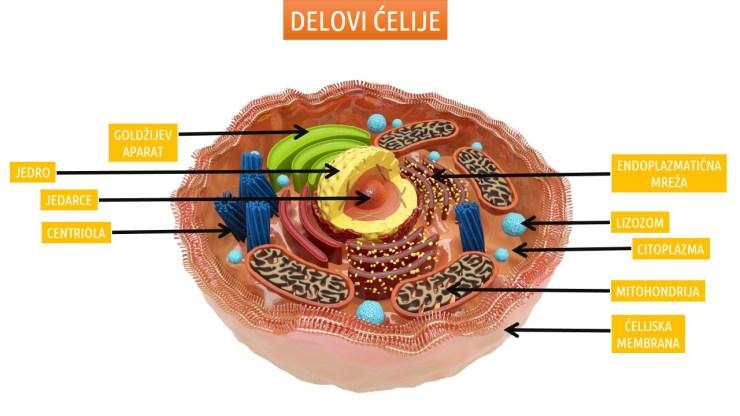 Delovi ćelije