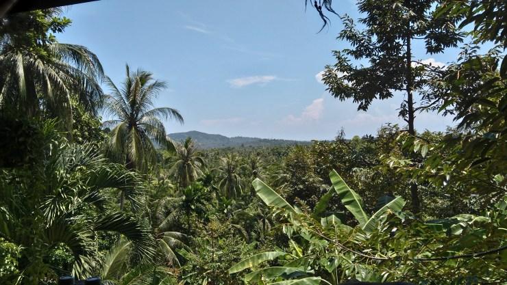 Džungla - Khao Rha
