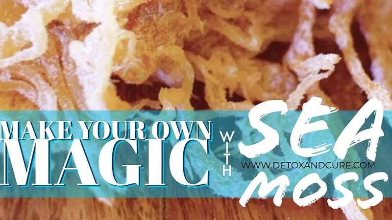 golden sea moss on a timber table top with text overlay saying 'make your own magic with sea moss'