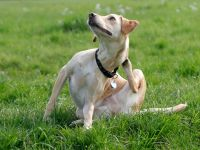 Relieve Your Dogs Itching & Scratching - Detoxapet