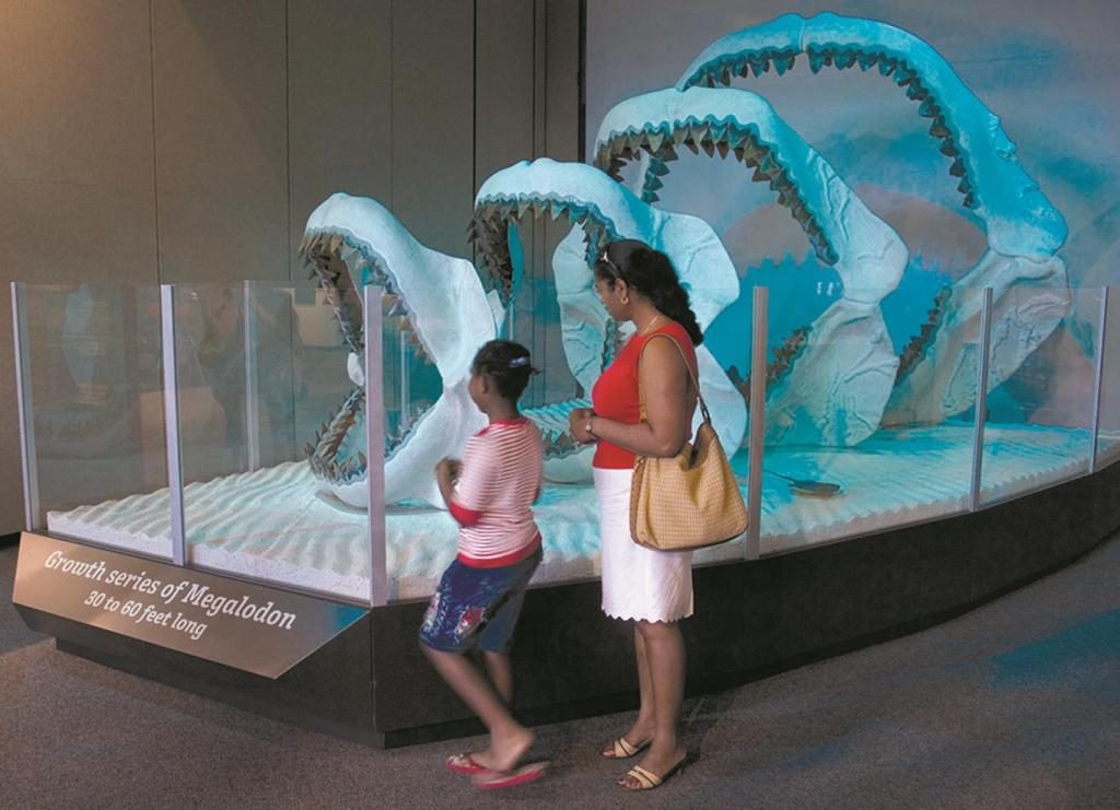 Largest Shark