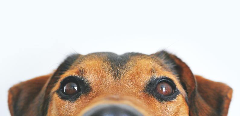 Little-Known Considerations To Make Before Getting a Dog