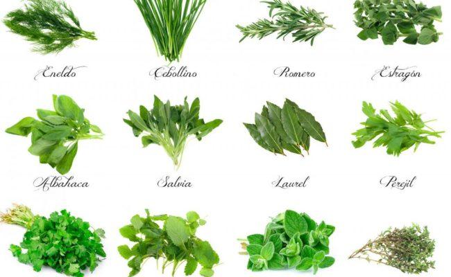 Plantas Aromáticas En La Cocina Deulonder