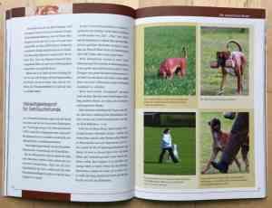 Deutscher Boxer Buch - Kapitel Erziehung