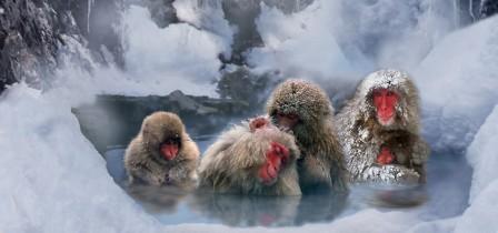 Les bienfaits de la douche froide ! Nos cousins éloignés ont l'air d'apprécier leur bain froid ! Dev-perso vous conseille d'essayer la douche froide